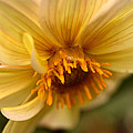 Bee Trap by Wanda Brandon
