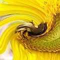 Bee Twirl by Belinda Lee