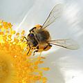 Bee-u-tiful Squared by TK Goforth