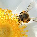 Bee-u-tiful by TK Goforth
