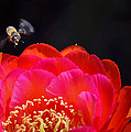 Bee Uti Full by Deb Halloran