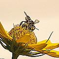 Bee Utiful Day by Kim Loftis