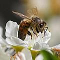 Bee4honey by Patrick Witz