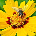 Beeautiful by Frozen in Time Fine Art Photography