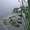 Beebe Lake Tableau by Joseph Yarbrough