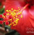 Beelight by Arlene Carmel