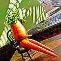 Beer Belly Carrot On A Hot Day by Sarah Loft