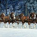 Clydesdales 8 Hitch On A Snowy Day by Don  Langeneckert