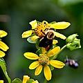Bees At Work by Tara Potts