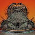 Beetle 41 by Javier Torrent/vwpics