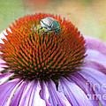 Beetle Bug by Juli Scalzi