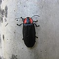 Beetlebug's Stroll by Rebecca Hassinger
