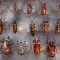 Beetles - The Usual Suspects  by Mike Savad