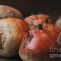 Beets by Terry Rowe