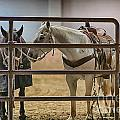 Before The Rodeo by Douglas Barnard