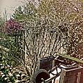Behind The Garden by Tom Gari Gallery-Three-Photography