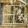 Beige Window At The End Of Winter by Kathy Barney