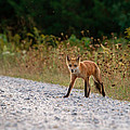 Being Stalked While Stalking by Chuck Homler