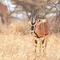 Beisa Oryx Orxy Beisa by Liz Leyden