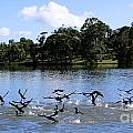 Belconnen Lake by Ben Yassa