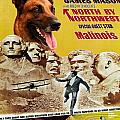 Belgian Malinois Art Canvas Print - North By Northwest Movie Poster by Sandra Sij