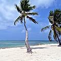 Beautiful Belize Palms by Kristina Deane