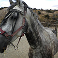 Bella On The Ranch Almanzora Mountain Spain  by Colette V Hera  Guggenheim