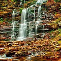 Below Ganoga Falls by Nick Zelinsky
