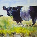 Belted Galloway Cow by Mike Jory