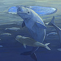 Beluga Whales Swimming As A Pod by ACE Coinage painting by Michael Rothman