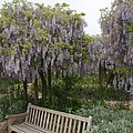 Bench And Wisteria by Christiane Schulze Art And Photography