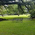 Bench At Oak Alley Plantation by Denise Mazzocco