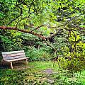 Bench In Park  by Amy Lucid