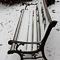 Bench In Snow by Eric Martin