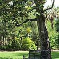 Bench Under The Magnolia Tree by Carol Groenen