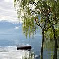 Bench With Trees On A Flooding Alpine Lake by Mats Silvan
