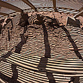 Benches At Meteor Crater In Arizona by Angela Stanton