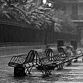 Benches In The Rain Bw by Susie Hoffpauir