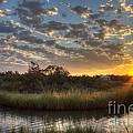 Bend In The Bayou Sunrise by Joan McCool