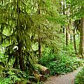 Bend In The Rainforest by Lexi Heft