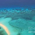 Beneath The Sea Great Barrier Reef Australia by Christine Dekkers