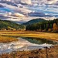 Benewah Lake Wild Rice Fields by Philip Kuntz