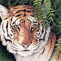 Bengal Tiger by Mary Zins