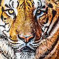 Bengal Tiger Portrait  by Aleksandar Mijatovic