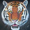 Bengal Tiger by Thomas J Herring