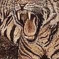 Bengal Tiger by Vera White