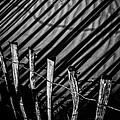 Benone - Shadow Fencing by Nigel R Bell