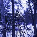 Berkshires Winter 8 - Massachusetts by Madeline Ellis