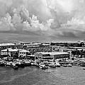 Bermuda by Elvira Pinkhas