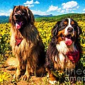Bernese Mountain Dog And Leonberger Among Wildflowers by Gary Whitton